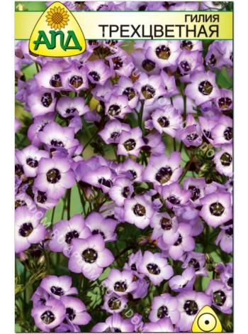 Гилия трехцветная (Gilia tricolor)